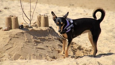 Mit Wuffi an den Strand: Hundeurlaub an der Nordsee